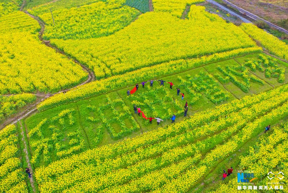 春的到来,给八桂大地换上绿衣裳,广西的田野地头,各种花卉竞相盛开,形成一幅美丽的画卷。2月14日,游客在广西柳州市融安县大良镇和南村油菜花田中游玩。新华网发 谭凯兴摄