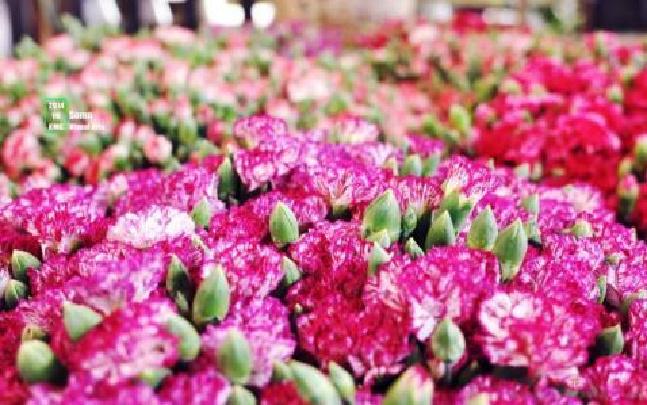 云南:节后花市价格销量双双上涨