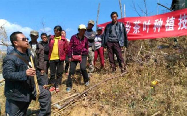 怒江:匹河怒族乡大力发展茶叶种植 带来脱贫新希望