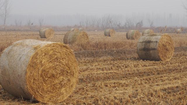 铁岭为水稻秸秆综合利用找出路