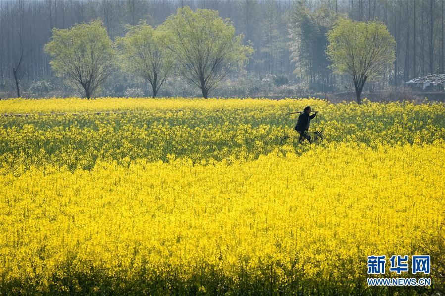 【春季美丽生态】皖南春色入画来