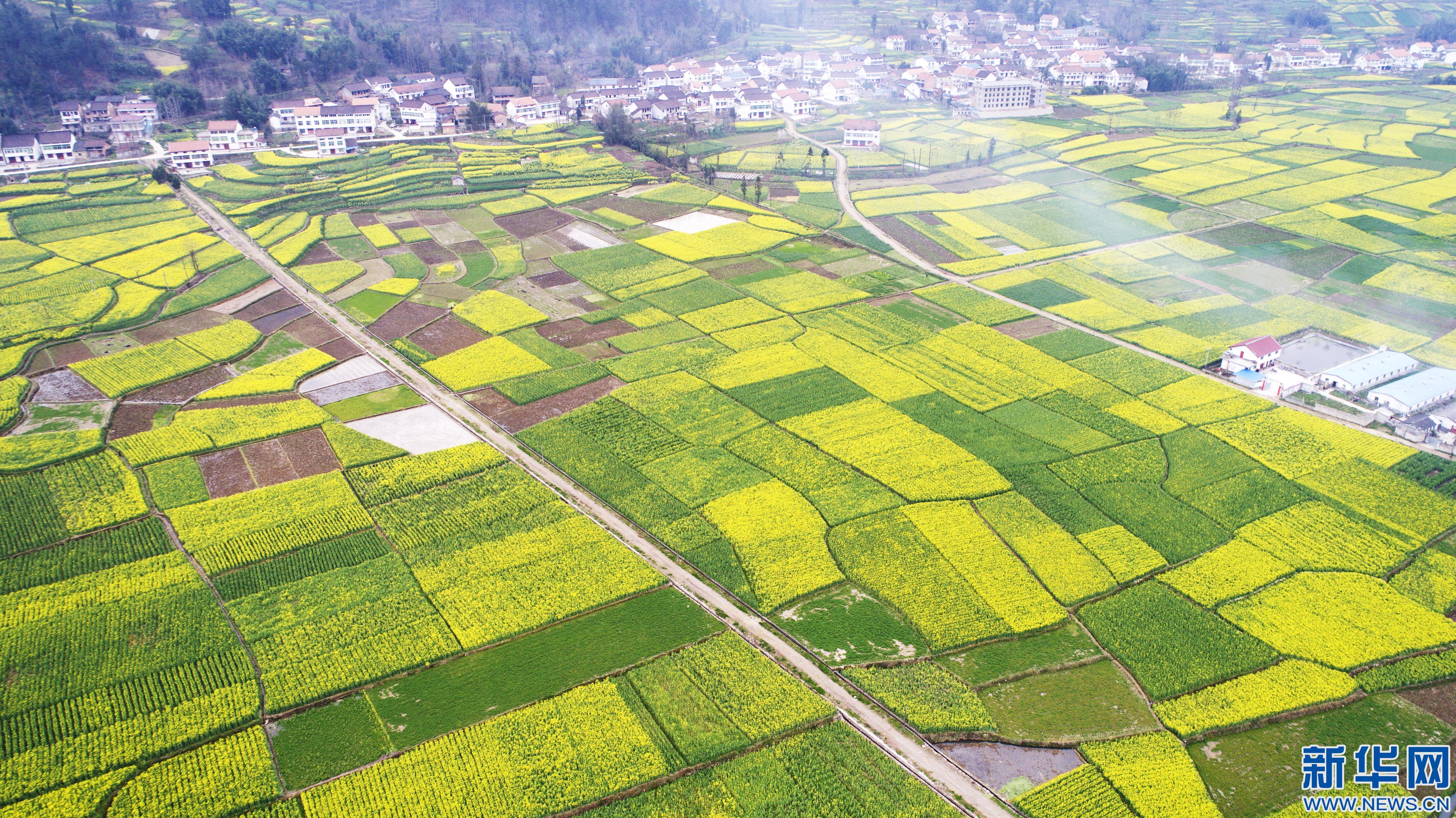 """【""""飞阅""""中国】陕西勉县:17万亩油菜花海扮靓美丽乡村"""