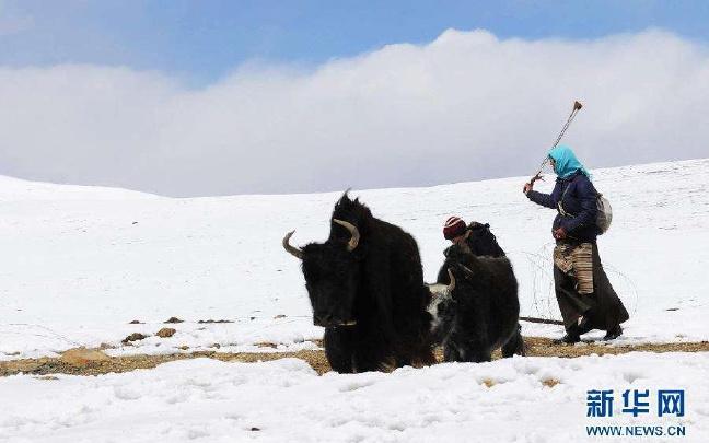 践行以人民为中心的发展思想 扎扎实实推进健康西藏进程