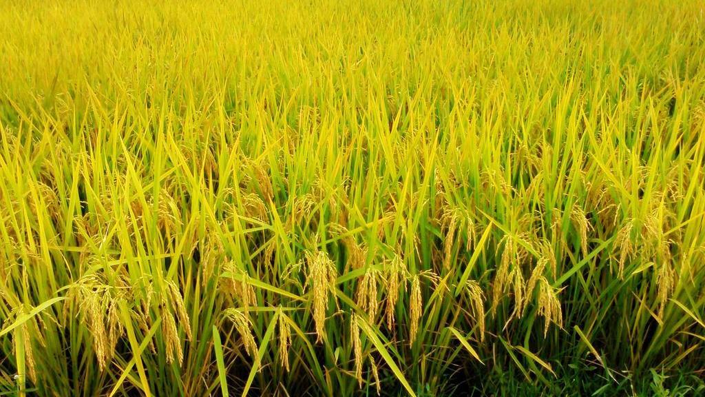 辽宁省水稻育秧种植保险签订第一单