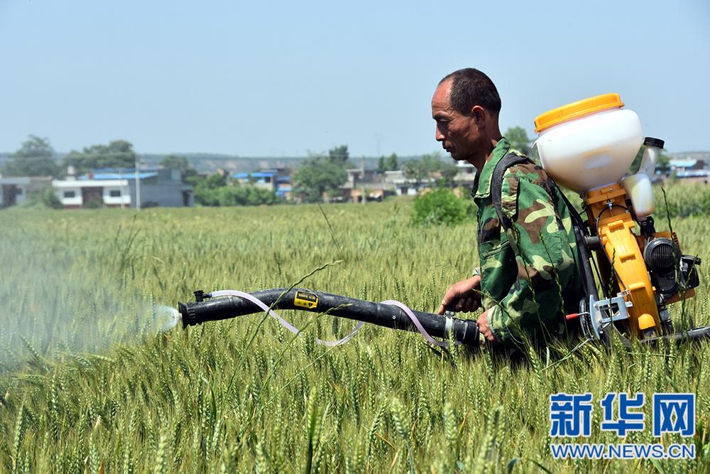 陕西全力抗击小麦病虫害 确保夏粮丰收