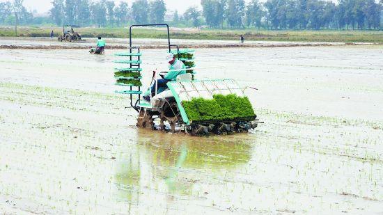 盘锦发力供给侧提升农业效益和竞争力
