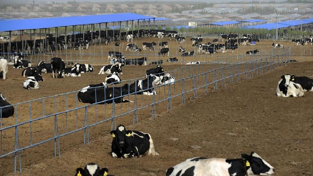 遼寧省全面開展奶牛生產性能測定