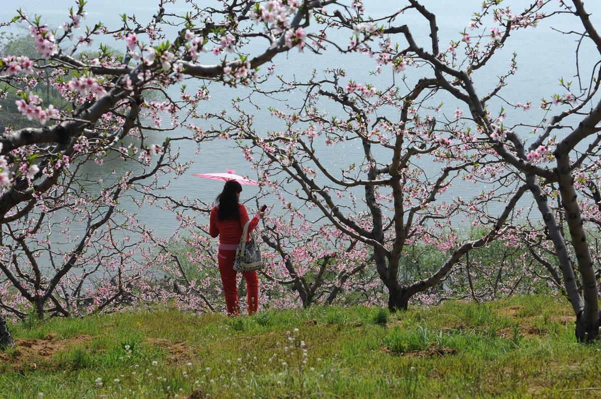 手绘桃花画法步骤图解