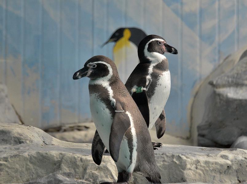 标题:北京动物园企鹅馆