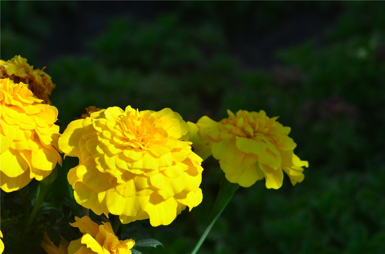 秋天有什么花会开?