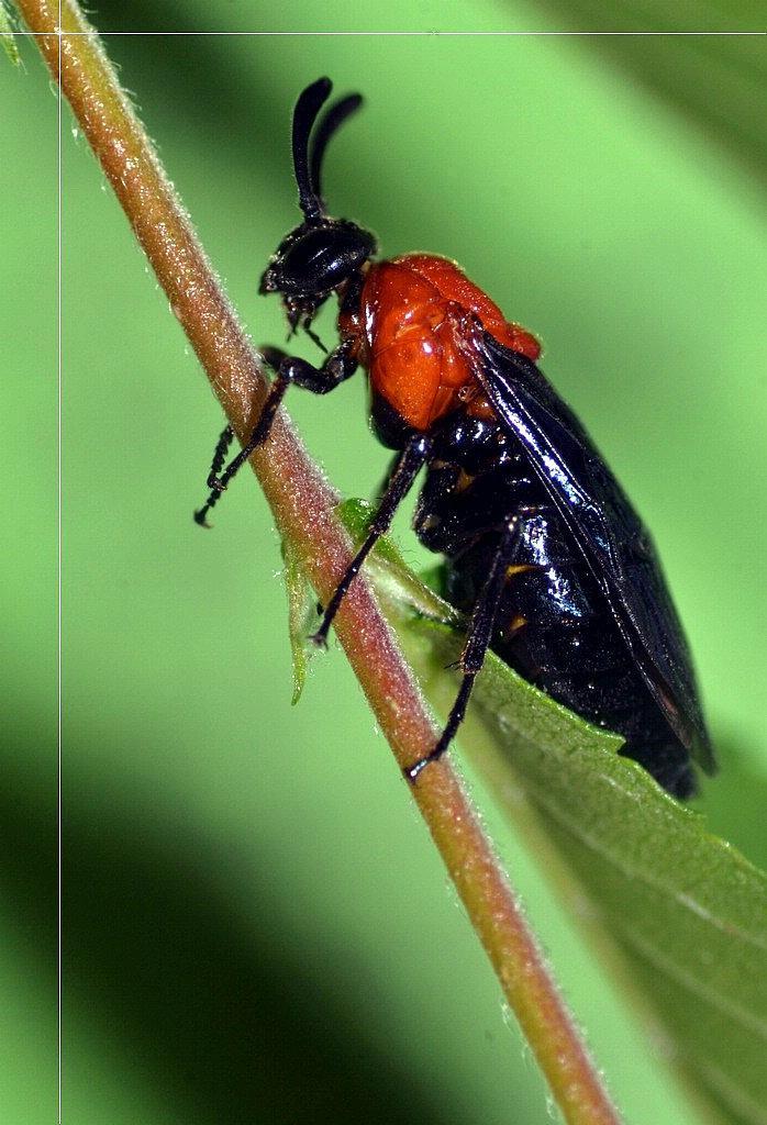 立体昆虫剪纸步骤图解