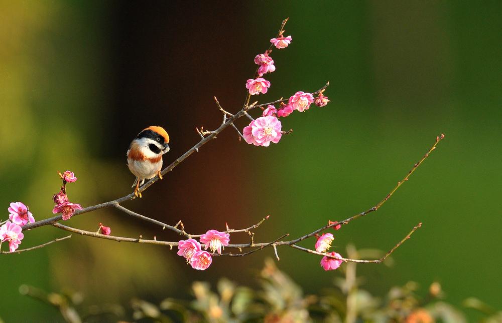 蓝翅叶鹎_【鳥類圖片及鳥名】( 上 ) @ 可可 :: 痞客邦