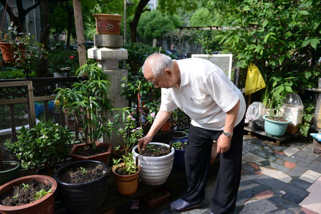"""原创老张的""""小花圃""""(续)——一位耄耋老人养花跟踪报道"""