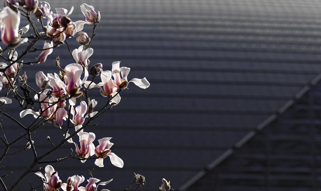 最美北京·早春二月 - zcyyglzx - zcyyglzx的博客