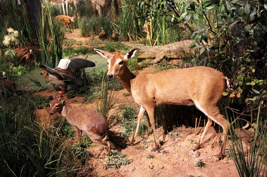 【15·1·1】动物标本展览·非洲动物大迁徙