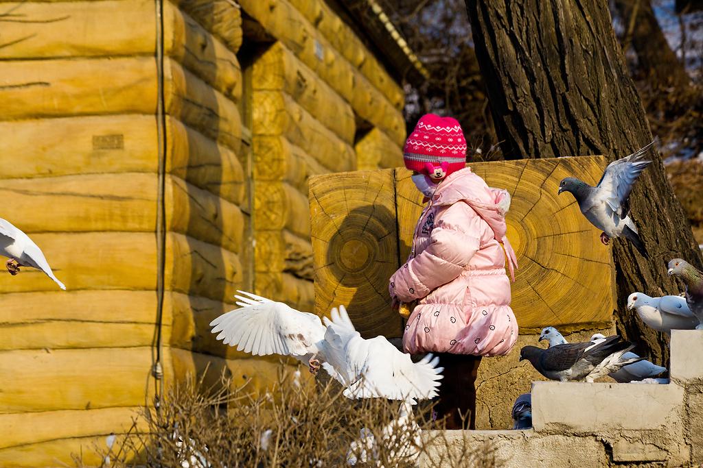 喂鸽子的小女孩_发展论坛
