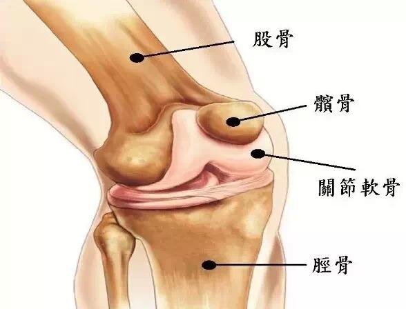 坚持一个月让你的膝盖年轻10岁 - 锦上添花 - 錦上添花 blog.