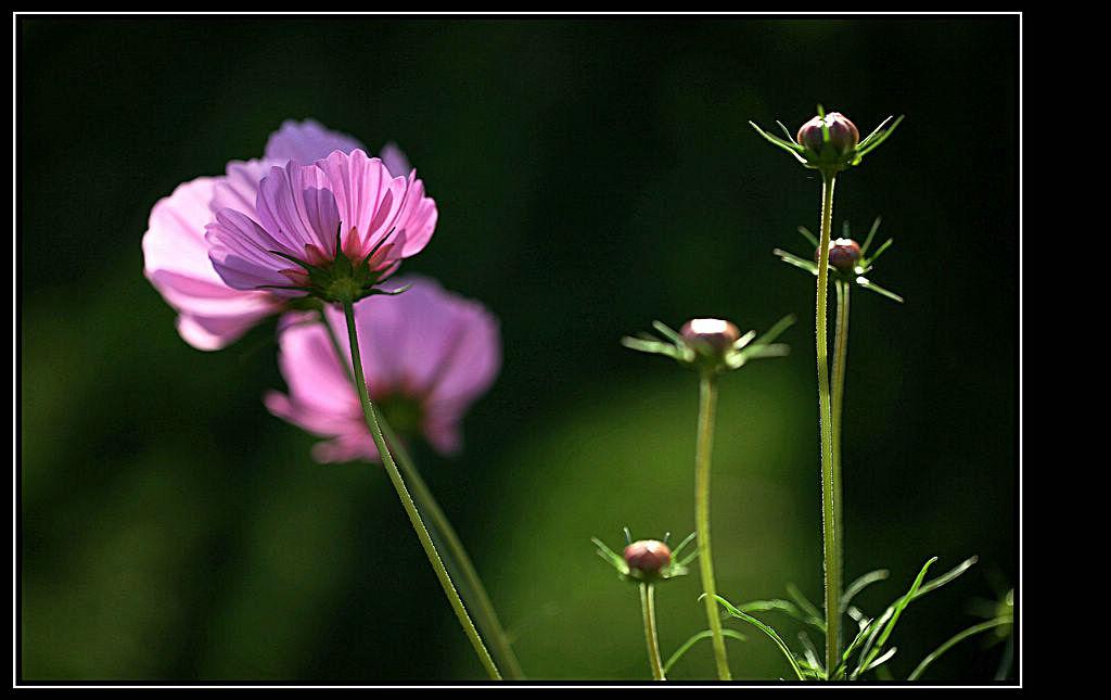 彩铅花朵步骤教程图解