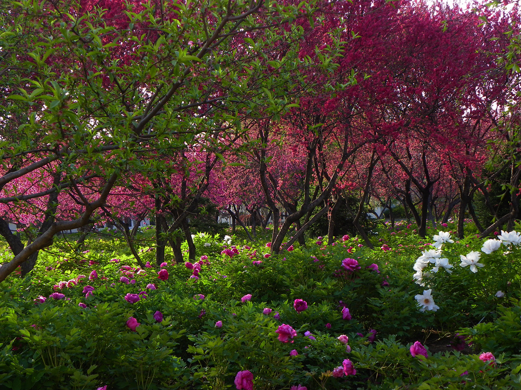 隋唐城遗址植物园随拍