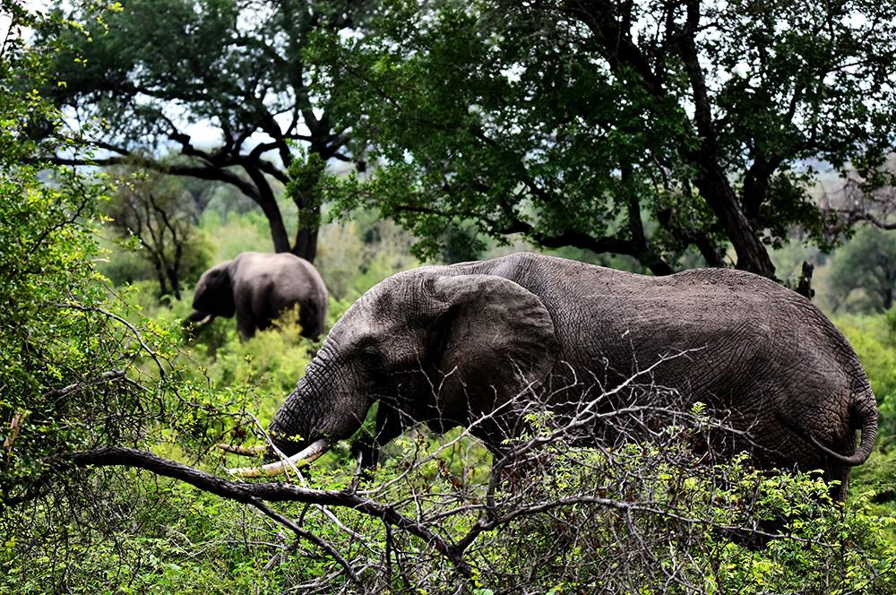 动物园拍摄大象