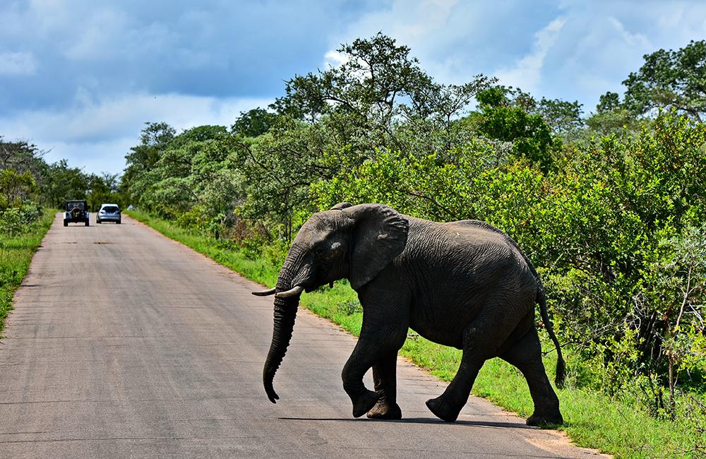 大象 动物 1000_650