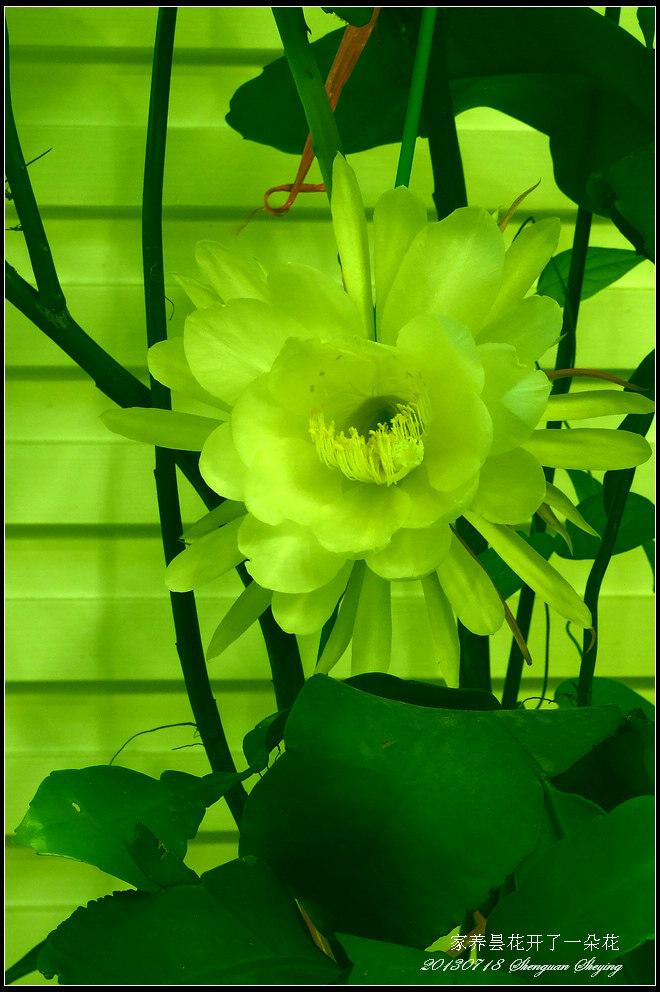 为他人开一朵花作文 为他人开一朵花答案