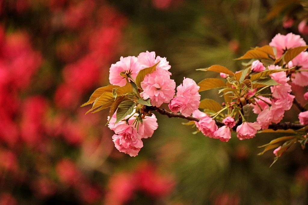 花草木栽培-小区的 河边,种植 了各种花草树木