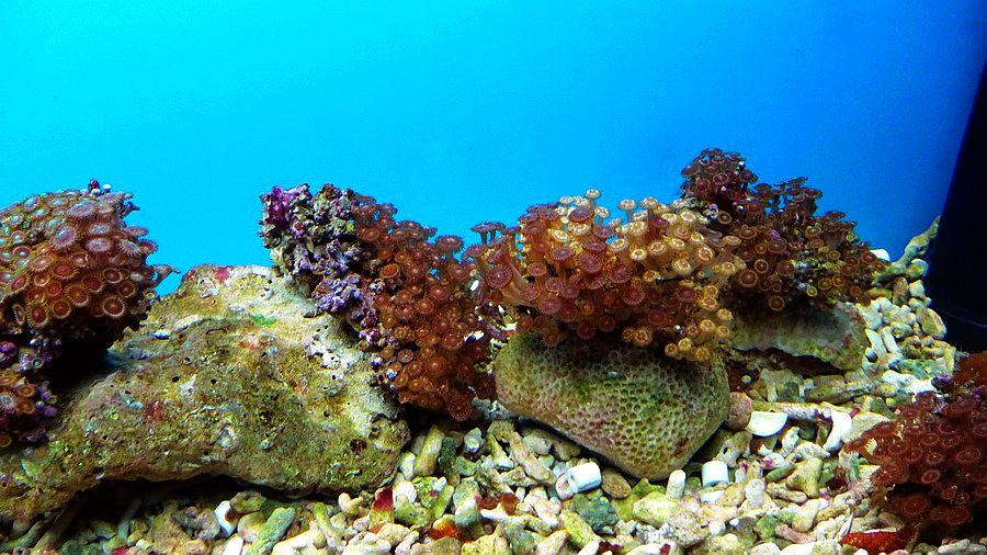 珊瑚剪纸步骤图解